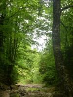 018 montée au Pech de Bugarach 14 05 15 [800x600]