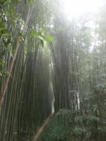 112 Bambouseraie d'Anduze 15 09 15 [800x600]