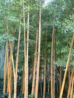 129 Bambouseraie d'Anduze 15 09 15 [800x600]